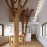 indoor-trees-slideshow