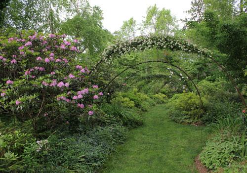 Pink Garden rose arbor.