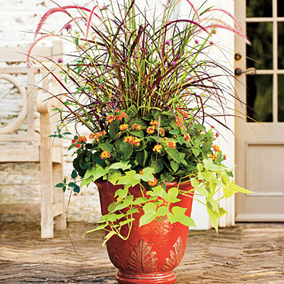 purple fountain grass, 'Fireworks' gomphrena, 'Bandana Red' lantanas and sweet potato vines