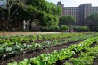 Community garden in Brooklyn, New York City.